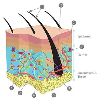 Understanding Your Skin Symetrie Aesthetic Clinic Stourbridge